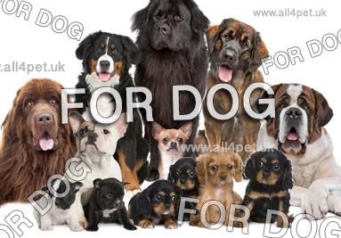 dla psów